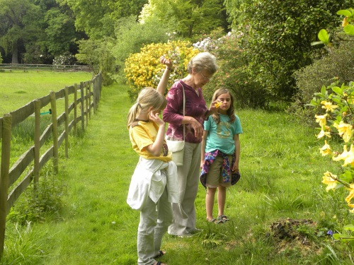 Younger Weasels and their Grandma in a very English garden.