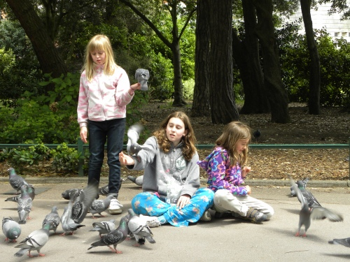 Weasels and pigeons in the park, Bournemouth