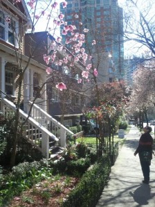 Just a house in Downtown Vancouver...With the most amazing Magnolia tree.