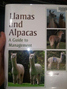 And sometimes we support the unusual - Why shouldn't Llamas and Alpacas have the chance to be Managers?